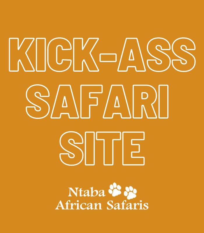 safari site revamp